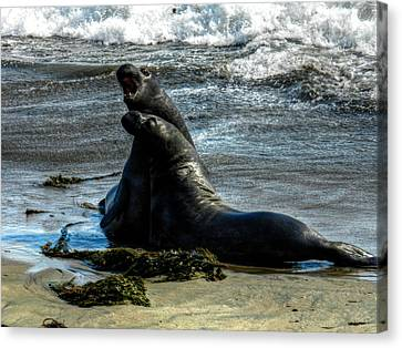 California - Elephant Seals Of Big Sur 006 Canvas Print by Lance Vaughn
