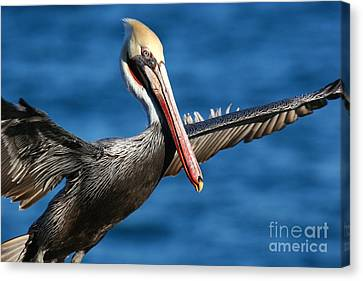 Freedom In Blue Canvas Print