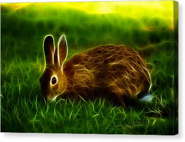 California Hare - 0291 Canvas Print by James Ahn