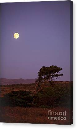 California Moon Canvas Print by Diane Diederich