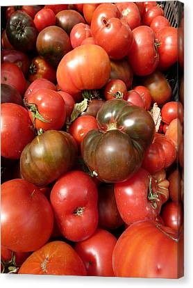 California Napa - Cakebread Tomatoes Canvas Print by Benjamin Weinberg