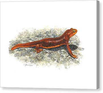 California Newt Canvas Print