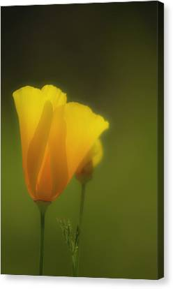 Canvas Print featuring the photograph California Poppies 2 by Sherri Meyer
