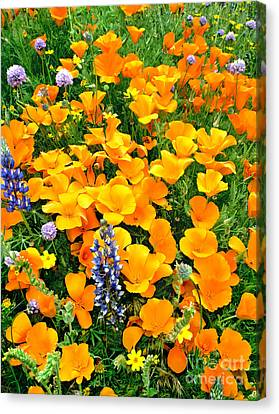 Canvas Print featuring the photograph California Poppies And Betham Lupines Southern California by Dave Welling