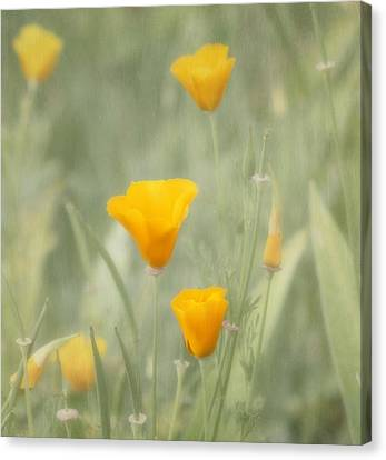 California Poppies Canvas Print by Kim Hojnacki