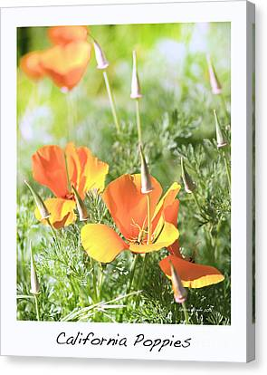 California Poppies Canvas Print by Artist and Photographer Laura Wrede