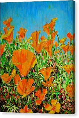 California Poppy Painting Canvas Print
