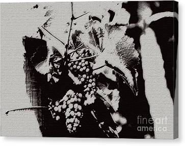 California Vineyard Canvas Print by Linda Shafer