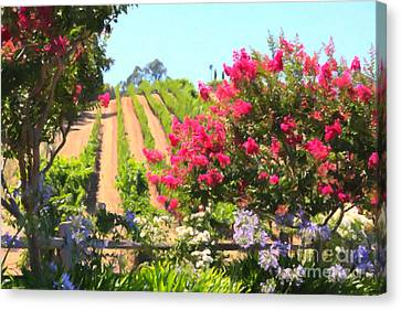 California Vineyard Wine Country 5d24495 Canvas Print by Wingsdomain Art and Photography