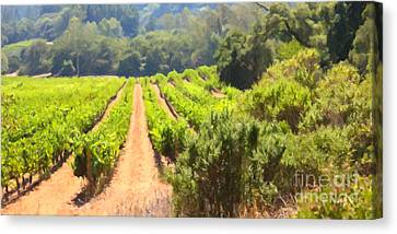 California Vineyard Wine Country 5d24518 Long Canvas Print by Wingsdomain Art and Photography