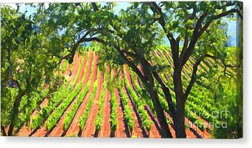 California Vineyard Wine Country 5d24519 Long Canvas Print by Wingsdomain Art and Photography