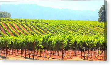 California Vineyard Wine Country 5d24623 Long Canvas Print by Wingsdomain Art and Photography