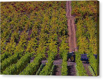 California Vineyards Canvas Print by Garry Gay