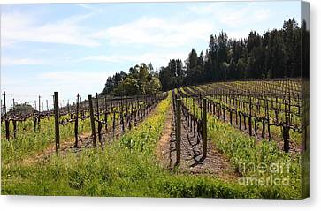 California Vineyards In Late Winter Just Before The Bloom 5d22167 Canvas Print by Wingsdomain Art and Photography