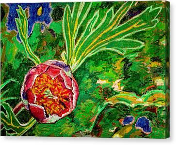California Wild Peony Canvas Print