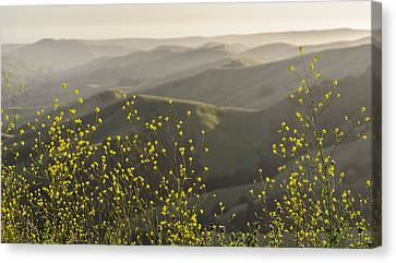 Canvas Print featuring the photograph California Wildflowers by Steven Sparks