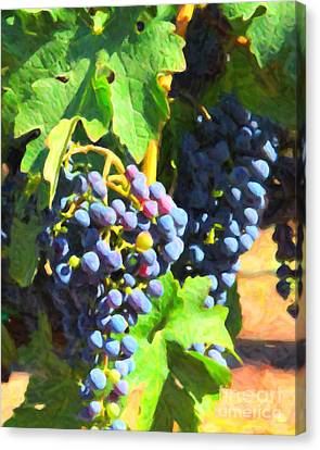 California Wine Country Grape Vine 5d24630 Canvas Print by Wingsdomain Art and Photography