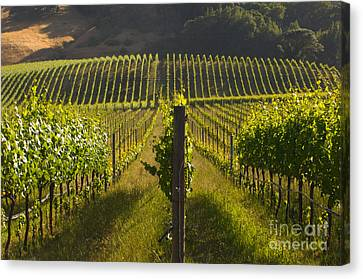 California Wine Grape Vineyard Canvas Print by Ron Sanford