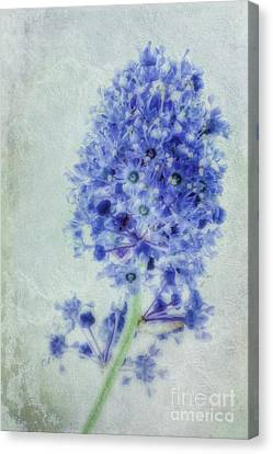 Californian Blue Canvas Print by John Edwards