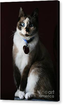 Calista Canvas Print by Judy Whitton