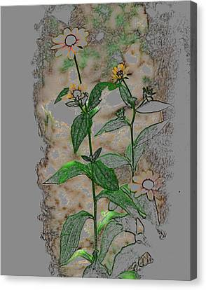 Call Me Daisy Canvas Print by Linda Segerson