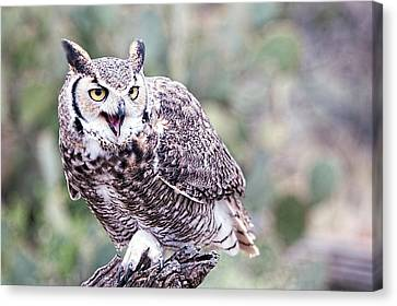 Canvas Print featuring the photograph Call Of The Owl by Dan McManus