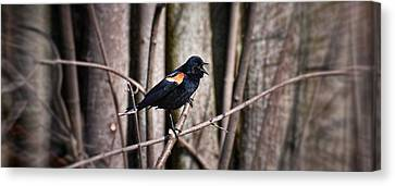 Call Of The Red Winged Blackbird Canvas Print by Henry Kowalski