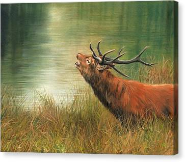 Red Deer Canvas Print - Call Of The Wild 2 by David Stribbling