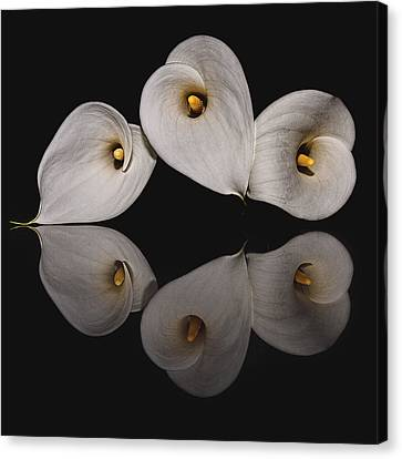 Calla Circle D4423 Canvas Print by Wes and Dotty Weber