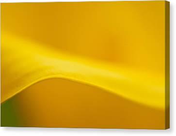Calla Curve Canvas Print