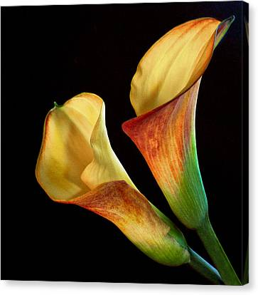 Calla Lilies By The Pair Canvas Print by David and Carol Kelly