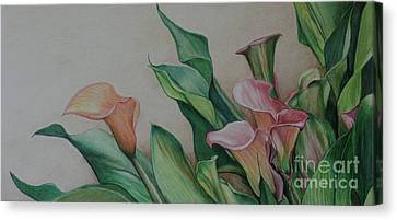 Calla Lilies Canvas Print by Charlotte Yealey