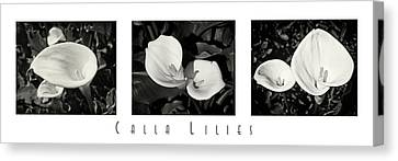 Calla Lilies Horizontal With Title Canvas Print