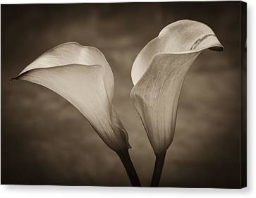 Canvas Print featuring the photograph Calla Lilies In Sepia by Sebastian Musial