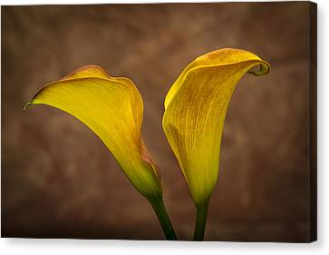Canvas Print featuring the photograph Calla Lilies by Sebastian Musial