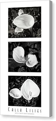 Calla Lilies Vertical With Title And Nameplate Canvas Print