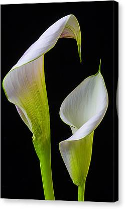 Calla Liliy Shapes Canvas Print by Garry Gay