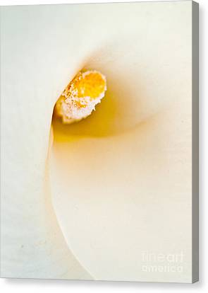 Calla Lilly Canvas Print by Bill Gallagher