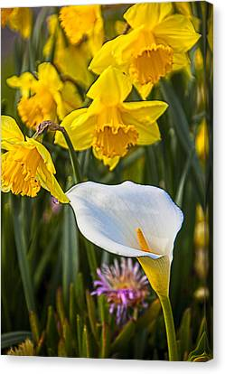 Calla Lily Canvas Print - Calla Lily And Doffodils by Garry Gay