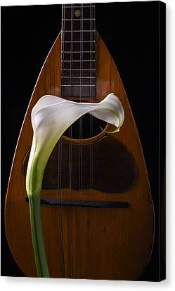 Calla Lily And Mandolin Canvas Print by Garry Gay