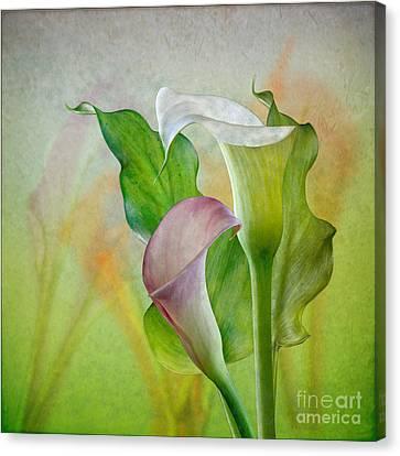 Calla Lily Garden Canvas Print