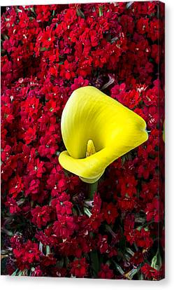 Calla Lily In Red Kalanchoe Canvas Print by Garry Gay