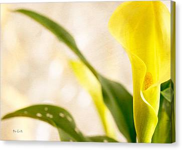 Calla Lily Two Canvas Print by Bob Orsillo