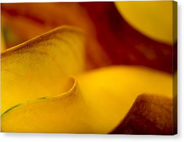 Calla Lily Canvas Print - Calla Lily Waves by Sebastian Musial