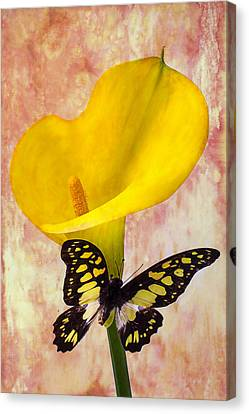 Calla Lily With Butterfly  Canvas Print by Garry Gay