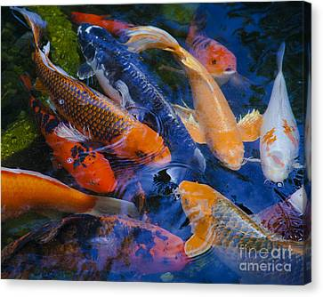 Canvas Print featuring the photograph Calm Koi Fish by Jerry Cowart
