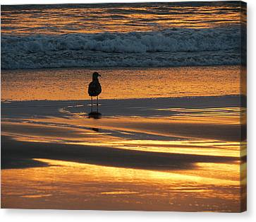 Canvas Print featuring the photograph Calm by Ramona Johnston