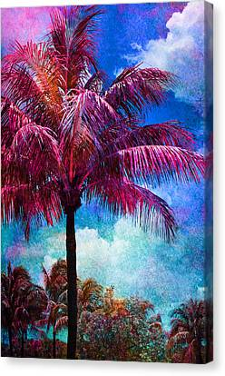 Calypso Canvas Print