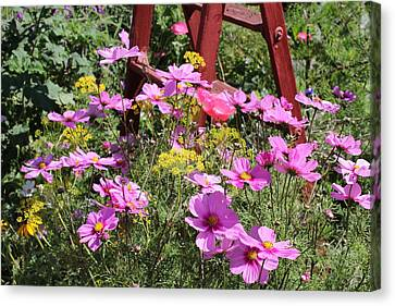 Cambria Garden 2 Canvas Print