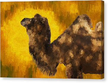 Camel In Desert Sun Canvas Print by Jack Zulli